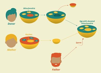 На 40-годишна възраст жената може лесно да роди свое генетично дете! И това не са предварително замразени яйцеклетки.